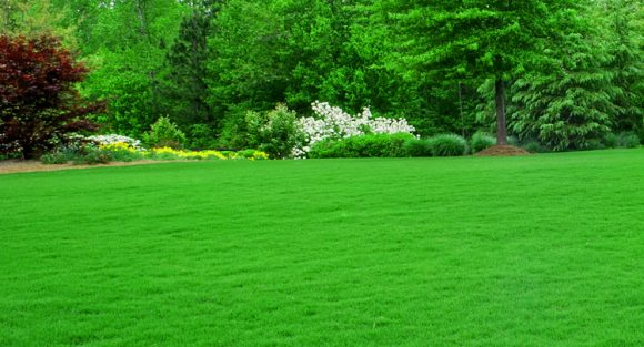 When is the best time to fertilize your lawn
