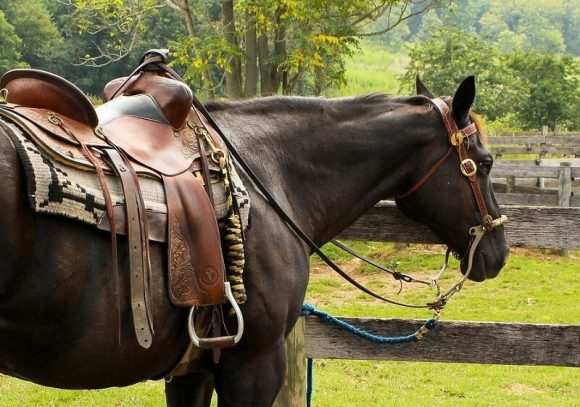 Best Horse Saddle Review Guide For 2020