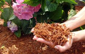 Best Mulch Review Guide For 2020