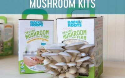 Best Back to the Roots Organic Mini Mushroom Grow Kit Review Guide For 2021-2022
