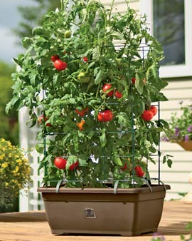 Best Tomato Planter Review Guide For 2021-2022