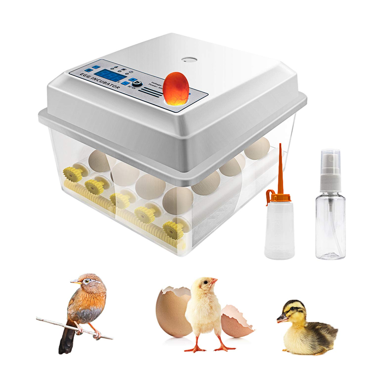 Best Quail Incubator Review Guide For 2021-2022