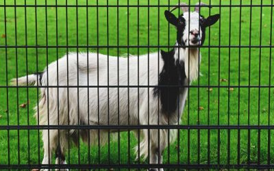 Best Fence For Goats Review Guide For 2021-2022