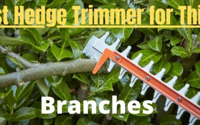 Best Hedge Trimmer For Thick Branches Review Guide For 2021-2022