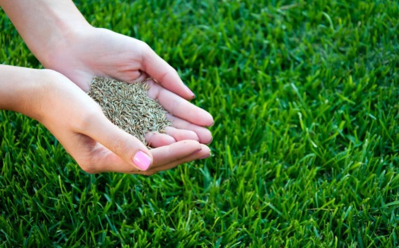 Best Bermuda Grass Seed Review Guide For 2021-2022