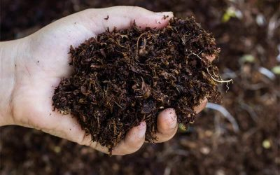 Best Organic Fertilizers Review Guide For 2021-2022