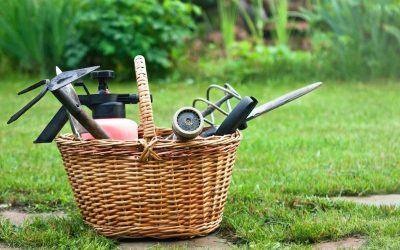 Best Weeding Tools Review Guide For 2021-2022